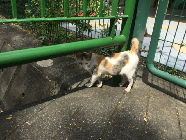 Singapore's Community Cats image